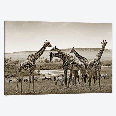 Gathering Giraffes Canvas Print #KTI65} by Klaus Tiedge Canvas Wall Art