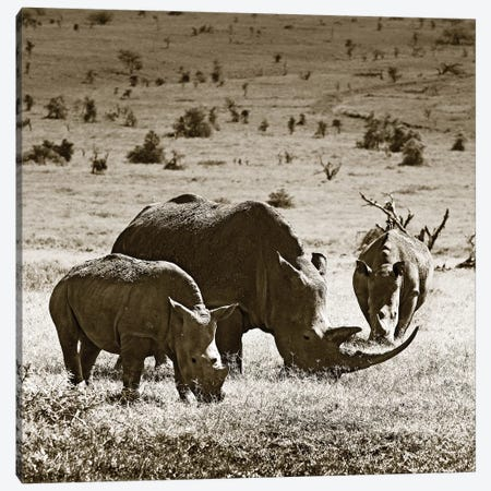 Grazing Rhinos Canvas Print #KTI66} by Klaus Tiedge Canvas Artwork