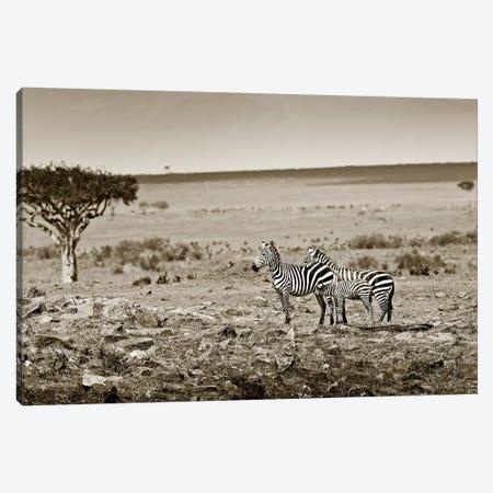 Harmonizing Zebra family Canvas Print #KTI67} by Klaus Tiedge Canvas Wall Art