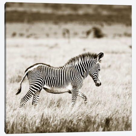 Innocent Zebra Canvas Print #KTI68} by Klaus Tiedge Canvas Art Print