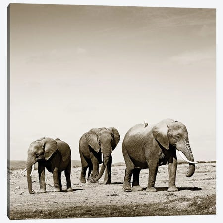 Lumbering Elephants Canvas Print #KTI69} by Klaus Tiedge Canvas Print