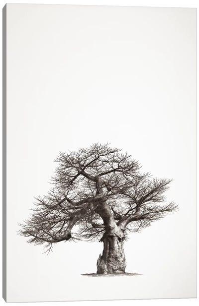 Baobab Legacy I Canvas Art Print