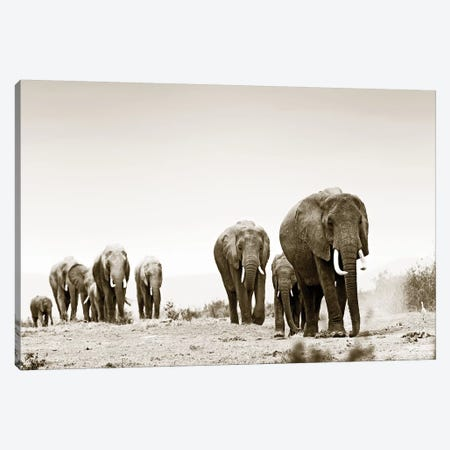 Marching Elephants Canvas Print #KTI70} by Klaus Tiedge Canvas Wall Art