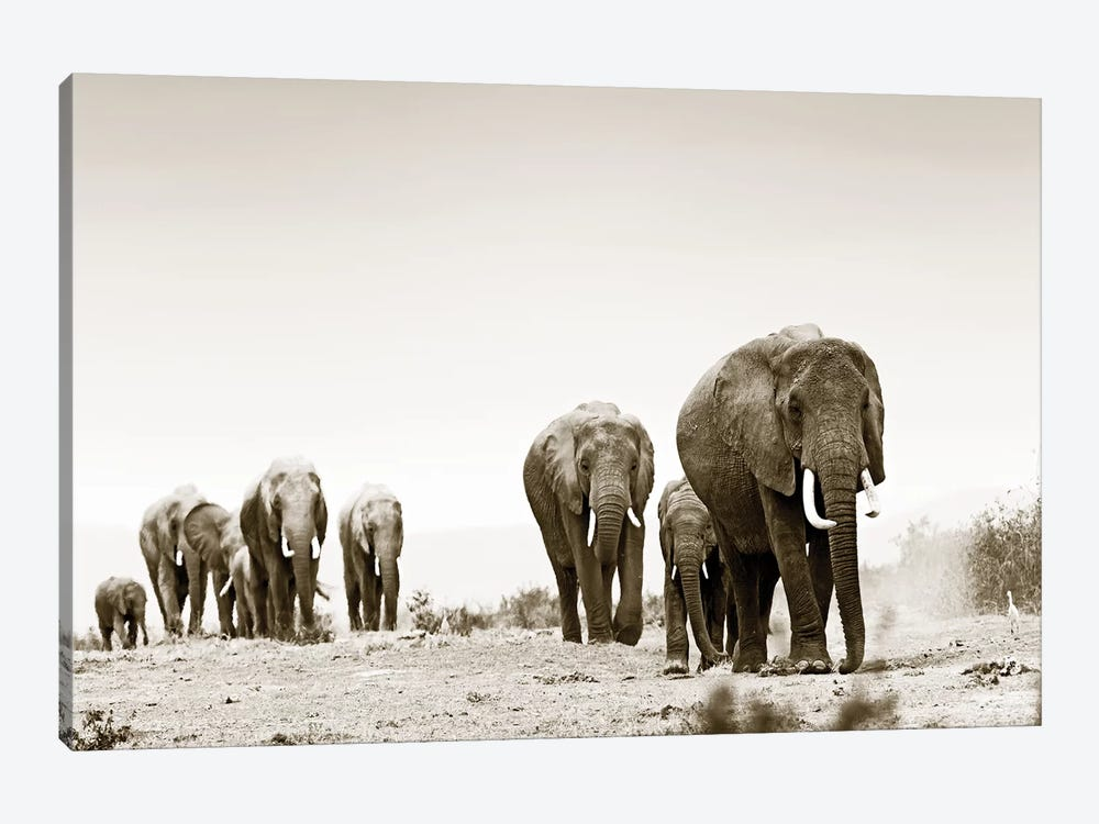 Marching Elephants by Klaus Tiedge 1-piece Canvas Print