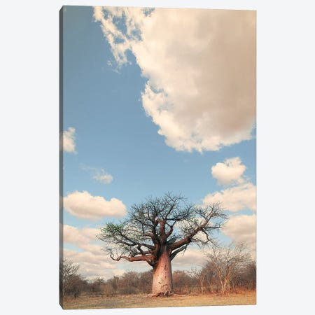 Naye Naye Baobab I Canvas Print #KTI71} by Klaus Tiedge Canvas Wall Art
