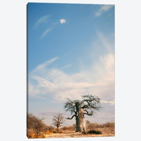Naye Naye Baobab II Canvas Print #KTI72} by Klaus Tiedge Canvas Artwork