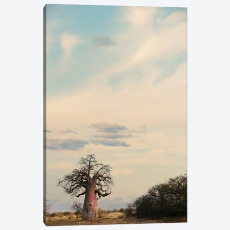 Naye Naye Baobab III Canvas Print #KTI73} by Klaus Tiedge Canvas Artwork