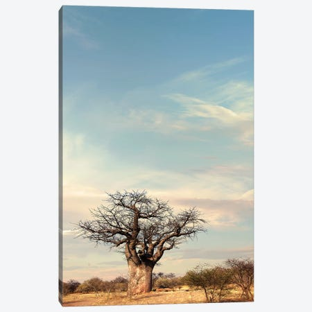 Naye Naye Baobab IV Canvas Print #KTI74} by Klaus Tiedge Canvas Print
