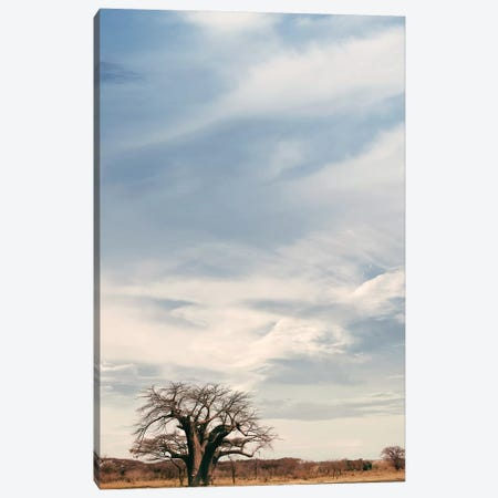 Naye Naye Baobab V Canvas Print #KTI75} by Klaus Tiedge Canvas Print