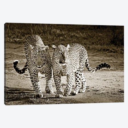 Playful Leopards Canvas Print #KTI78} by Klaus Tiedge Canvas Artwork
