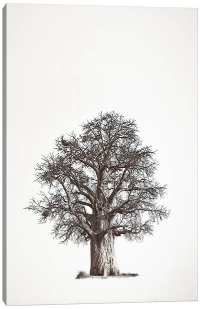 Baobab Legacy II Canvas Art Print