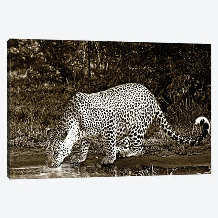 Refreshed Leopard Canvas Print #KTI81} by Klaus Tiedge Art Print