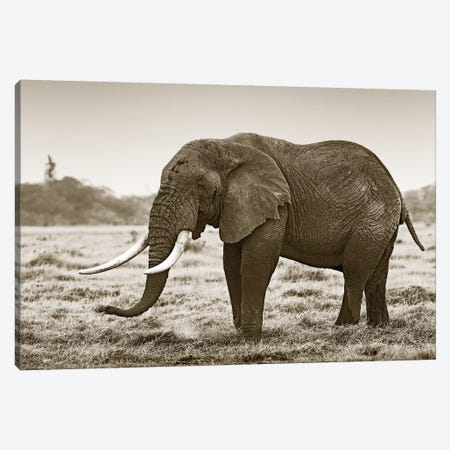 Resting Elephant Canvas Print #KTI82} by Klaus Tiedge Canvas Art Print