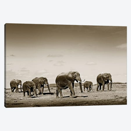 Wide spread Elephants Canvas Print #KTI87} by Klaus Tiedge Canvas Wall Art