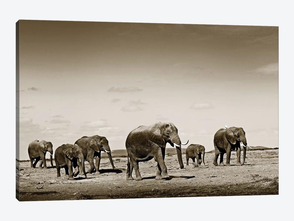 Wide spread Elephants by Klaus Tiedge 1-piece Art Print