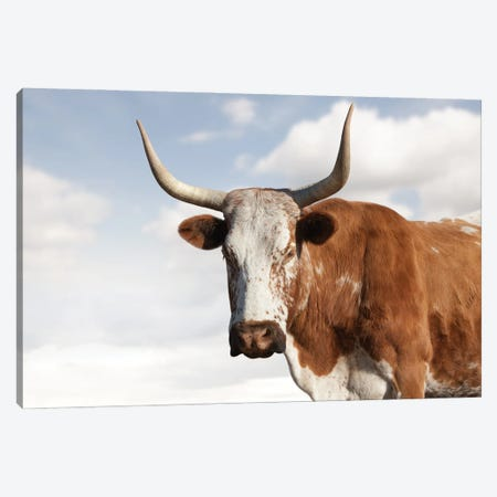 Nguni Cow Brown Canvas Print #KTI88} by Klaus Tiedge Canvas Art Print