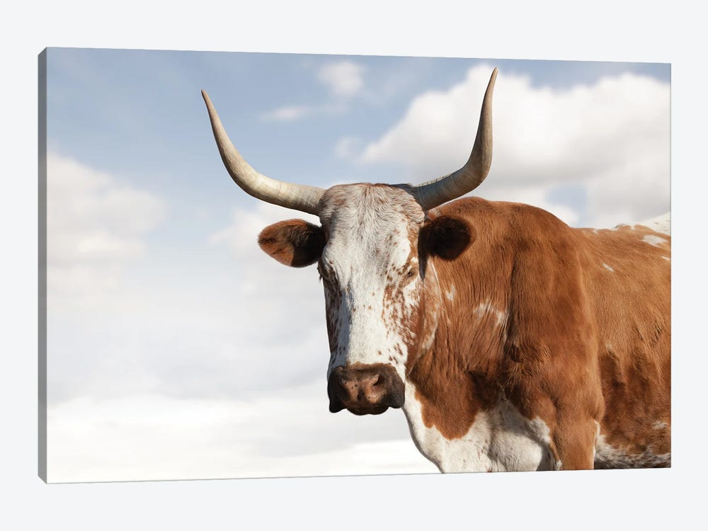 Nguni Cow Brown by Klaus Tiedge 1-piece Canvas Wall Art