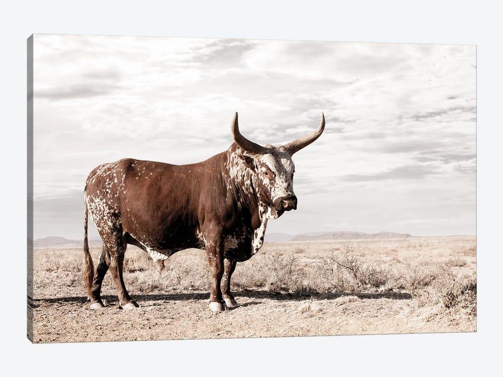 Nguni Cow Standing by Klaus Tiedge 1-piece Art Print
