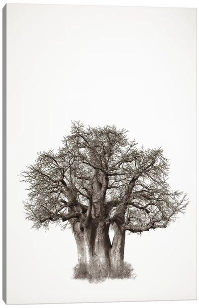 Baobab Legacy III Canvas Art Print