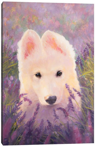 In The Lavender Fields Canvas Art Print