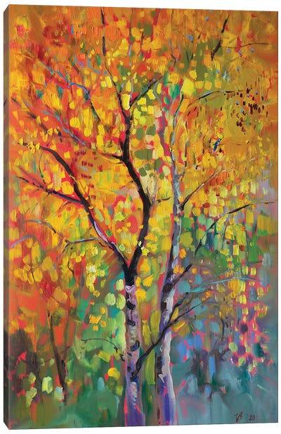 Birch Forest In Autumn Canvas Art Print