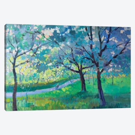 Blooming Trees Canvas Print #KTV14} by Katharina Valeeva Canvas Wall Art