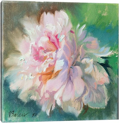 Delicate Peony Flower Canvas Art Print