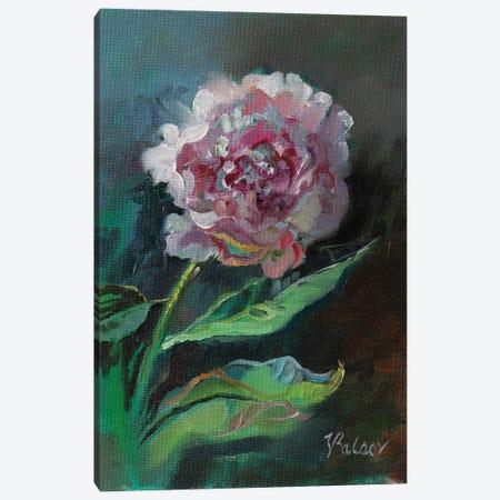 Pink Peony Flower Canvas Print #KTV74} by Katharina Valeeva Canvas Artwork
