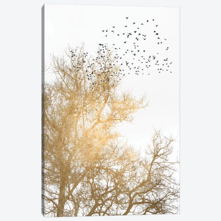 Golden Skies Canvas Print #KUB164} by Kubistika Art Print