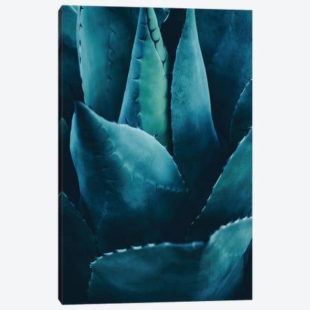 Cactus No 4 Canvas Print #KUB18} by Kubistika Canvas Artwork