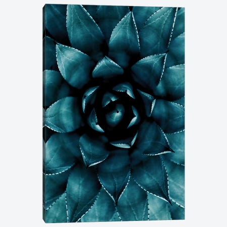 Cactus No 9 Canvas Print #KUB19} by Kubistika Canvas Art