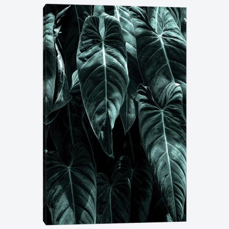 The Jungle Canvas Print #KUB77} by Kubistika Canvas Print