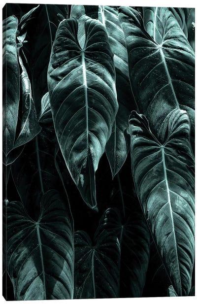 The Jungle Canvas Art Print