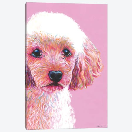 Poodle On Pink Canvas Print #KWO11} by Kirstin Wood Canvas Wall Art