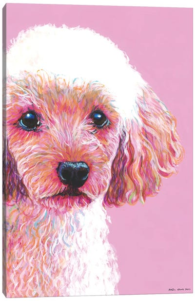Poodle On Pink Canvas Art Print