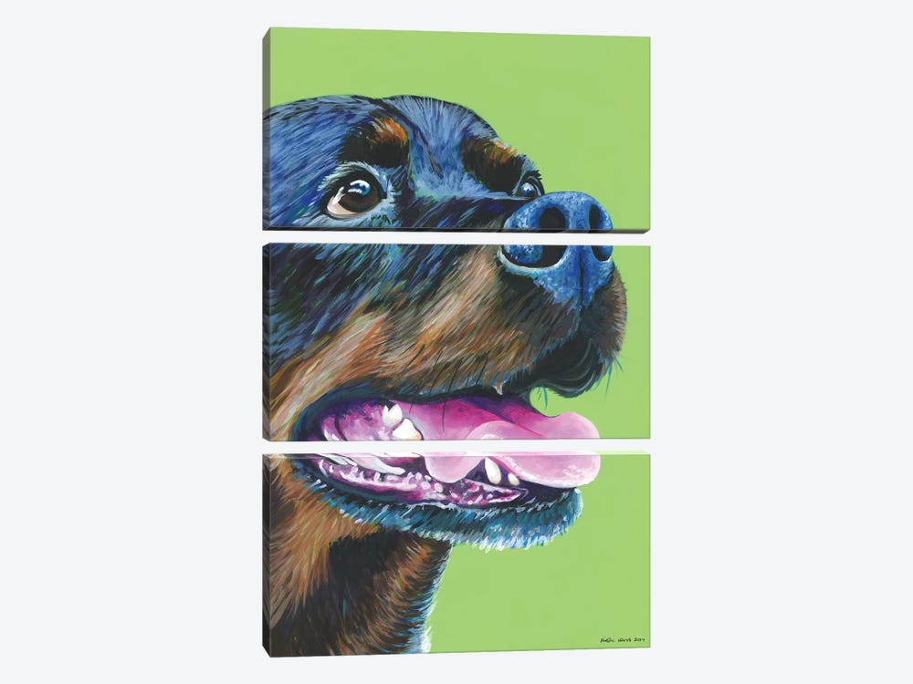 Rottweiller On Lime by Kirstin Wood 3-piece Canvas Artwork
