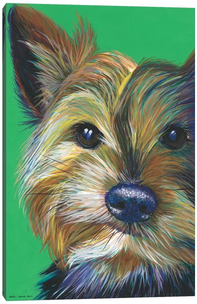 Yorkshire Terrier On Emerald Canvas Art Print