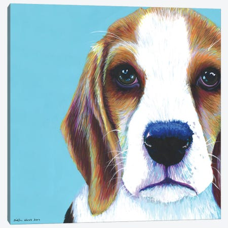 Beagle On Aqua, Square Canvas Print #KWO17} by Kirstin Wood Canvas Art Print