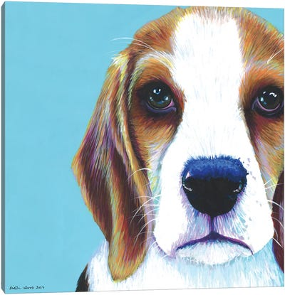 Beagle On Aqua, Square Canvas Art Print