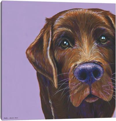 Brown Labrador On Lilac, Square Canvas Art Print