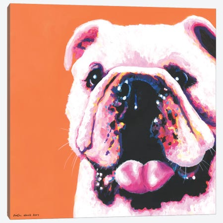 Bulldog On Orange, Square Canvas Print #KWO20} by Kirstin Wood Art Print