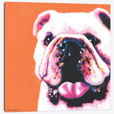 Bulldog On Orange, Square Canvas Print #KWO20} by Kirstin Wood Art Print