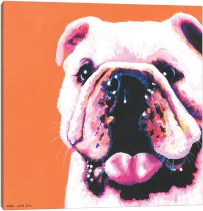 Bulldog On Orange, Square Canvas Art Print
