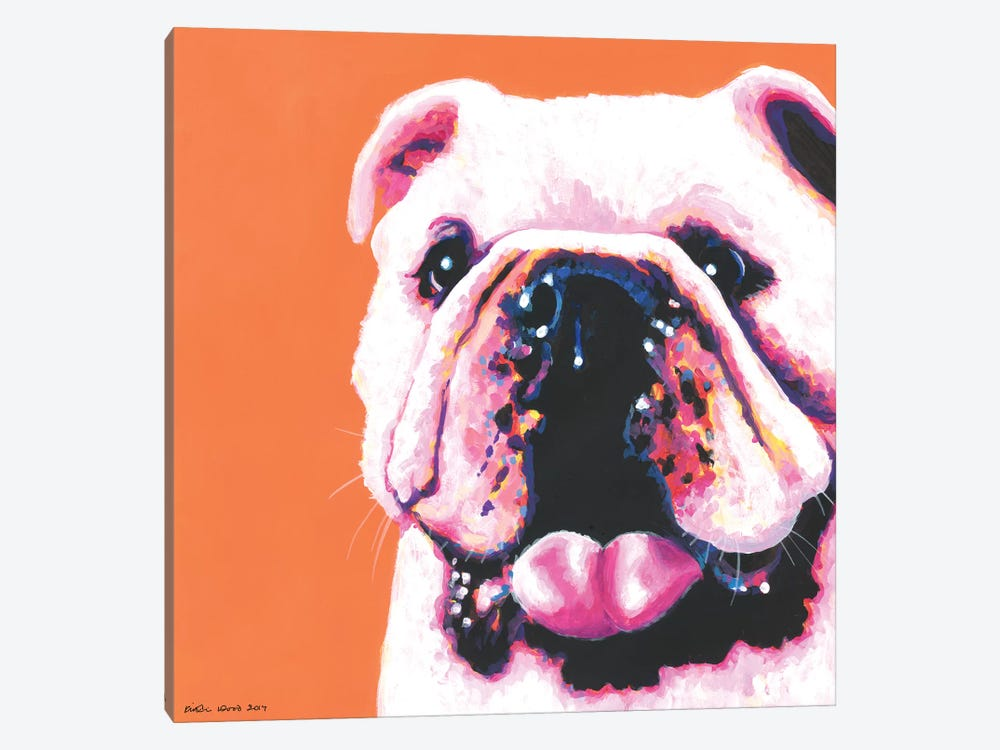 Bulldog On Orange, Square by Kirstin Wood 1-piece Canvas Art