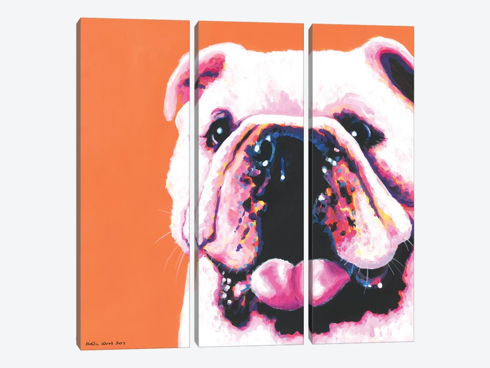 Bulldog On Orange, Square by Kirstin Wood 3-piece Canvas Artwork