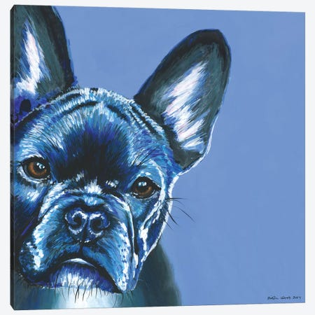 French Bulldog On Blue, Square Canvas Print #KWO22} by Kirstin Wood Art Print