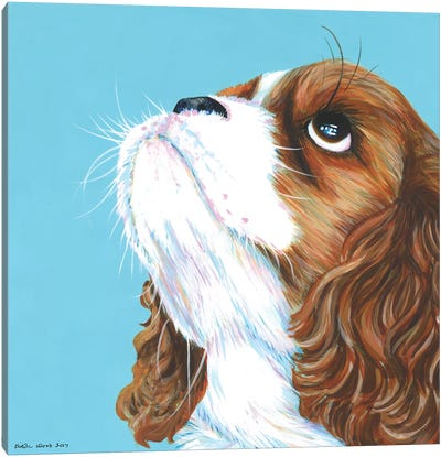 King Charles Cavalier On Aqua, Square Canvas Art Print