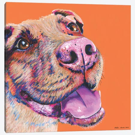 Pitbull On Orange, Square Canvas Print #KWO26} by Kirstin Wood Canvas Artwork