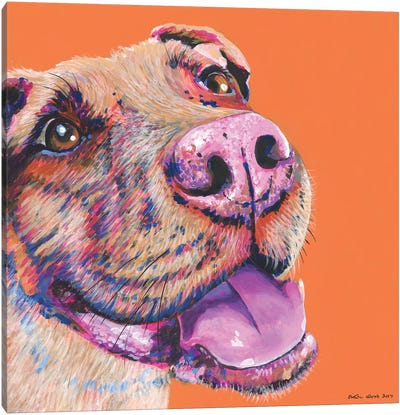 Pitbull On Orange, Square Canvas Art Print