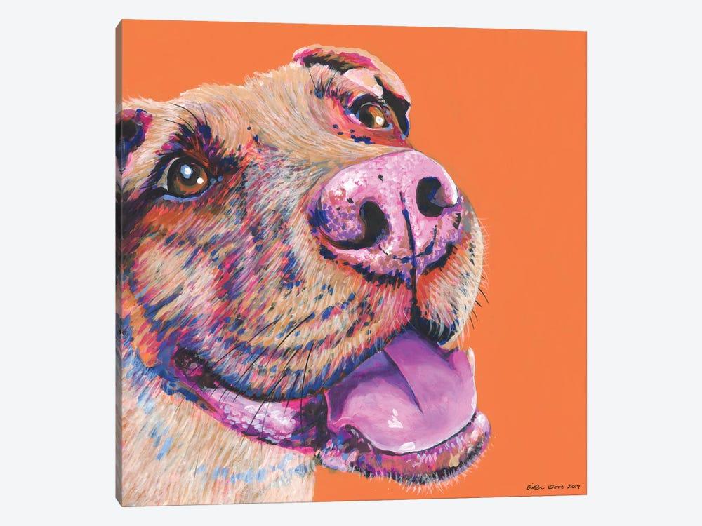 Pitbull On Orange, Square by Kirstin Wood 1-piece Canvas Art